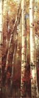 Birch Forest I - Mini Fine Art Print