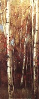 Birch Forest II - Mini Fine Art Print