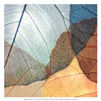 Blue and Orange Leaves II Fine Art Print