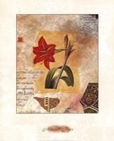 LILY Fine Art Print