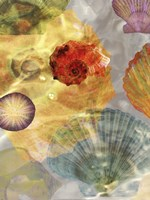 Shell Suite I Fine Art Print