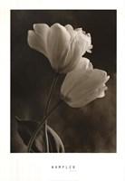 Bending Tulip Fine Art Print