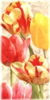 Glowing Tulips I Fine Art Print