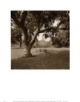 Arboretum Fine Art Print