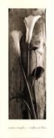 Driftwood Lilies Framed Print