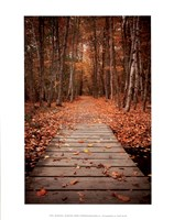 Woodland Path Fine Art Print
