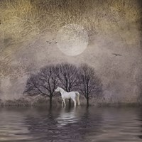 White Horse in Pond Fine Art Print