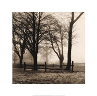 Woods with Fence Framed Print