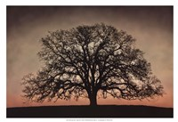 Majestic Oak Framed Print
