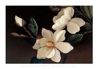 Magnolia Noir Fine Art Print