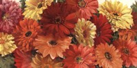 Bountiful Gerberas Crop Fine Art Print