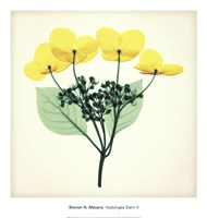 Hydrangea Stem II Fine Art Print