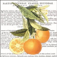 Citrus Edition II Fine Art Print