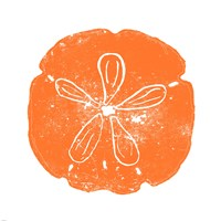 Orange Sand Dollar Fine Art Print