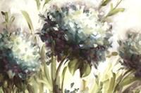 Hydrangea Field Fine Art Print