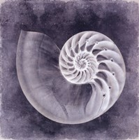 Ocean Blue IV Fine Art Print