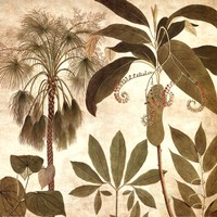 Palm Persuasion II Fine Art Print