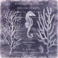 The Deep Blue Sea II Fine Art Print