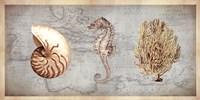 Sea Treasures I Fine Art Print