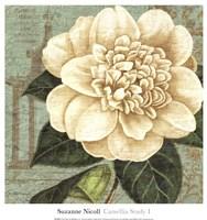 Camellia Study I Fine Art Print