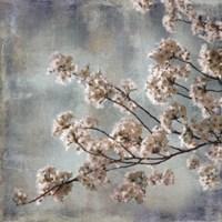 Aqua Blossoms I Fine Art Print