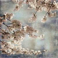 Aqua Blossoms II Fine Art Print