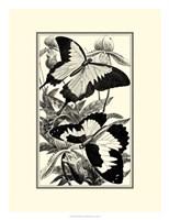 B&W Butterfly III Fine Art Print