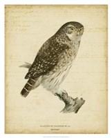 Non-Embellished Vintage Owl Fine Art Print
