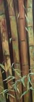 Bamboo Finale I Fine Art Print