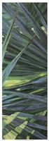 Fan Palm II Fine Art Print