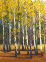 Fall in Glory II Fine Art Print