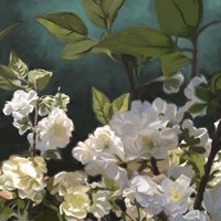 White Roses I Fine Art Print