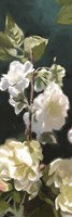 White Roses IV Fine Art Print