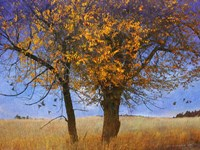 Yellow Elm Fine Art Print