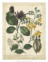 Non-Embellish Enchanted Garden I Fine Art Print