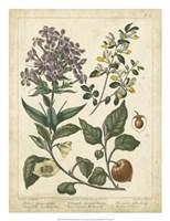 Non-Embellish Enchanted Garden II Fine Art Print