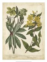Non-Embellish Enchanted Garden III Fine Art Print