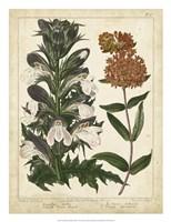 Non-Embellish Enchanted Garden IV Fine Art Print
