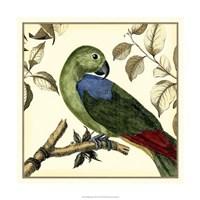 Tropical Parrot III Fine Art Print