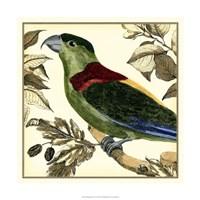 Tropical Parrot IV Fine Art Print