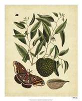 Moth, Pl. T86 Fine Art Print