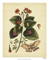 Moth, Pl. T91 Fine Art Print