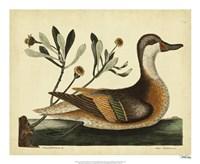 Ilatheria Duck, Pl. T93 Fine Art Print