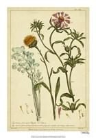 Iacea, Pl. CLll Fine Art Print