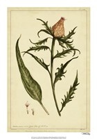 Iacea, Pl. CLIII Fine Art Print