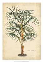 Palm of the Tropics III Fine Art Print