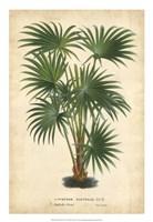 Palm of the Tropics IV Fine Art Print