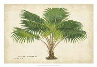 Palm of the Tropics V Fine Art Print