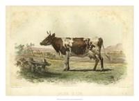 Vache D'Ayr Fine Art Print