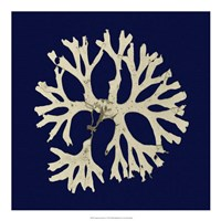 Seaweed on Navy I Fine Art Print